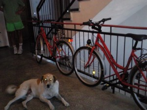 bicicletele-noastre-fara-aparare