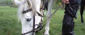 Un cal frumos