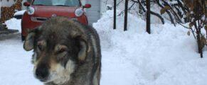 Ursu, un caine de Piatra Neamt, alergat de o masina de Bucuresti