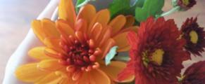 Cine sa le spuna bobocilor ca nu seamana cu floarea?