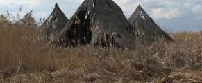Padurea si delta Comana nu sunt ucise de turisti, ci de un primar destoinic