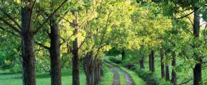Il camino de Transilvania