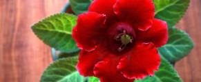 O floare din partea mea pentru cinstea oamenilor de la service