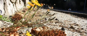 Ultimele flori inaintea celor de gheata