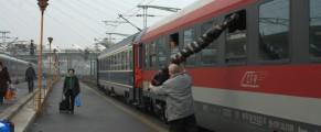 Brad autentic românesc, adus cu trenul din Neamț