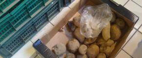 Cartofi din Germania, la Cora