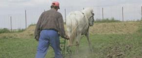 Cum e agricultura, asa si recensamantul
