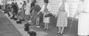 Casting de pisici negre la Hollywood 1961