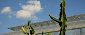Cactusii reginei Maria de la Balcic