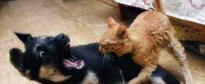 Dragoste pisiceasca