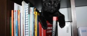 Toshiba stă pe cărți, nu pe Fb :)