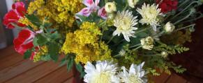Sânziene și niște flori necunoscute - alea roșii