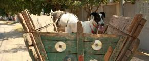 Un câine își așteaptă stăpânul în căruță