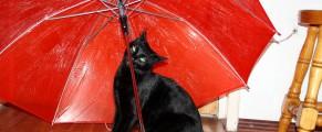 Noi două și o umbrelă