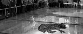Un câine care doarme, vara, chiar în Centrul istoric, la ușa Băncii Naționale a României
