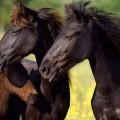 Cum a salvat Vodafone caii din Deltă