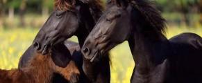Cai din Letea