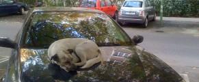 Un câine de la mine din cartier, azi dimineață