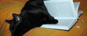 Toshiba citește