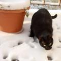 Toshiba pe zăpadă