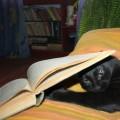 Ziua cărții concurează noaptea din Centrul istoric