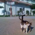 pisici grecesti