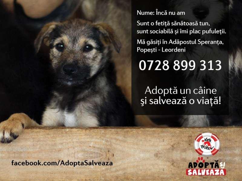 Adopta si Salveaza_VIER PFOTEN