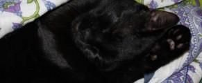toshiba-doarme