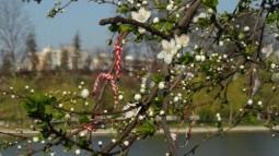 flori-corcodus
