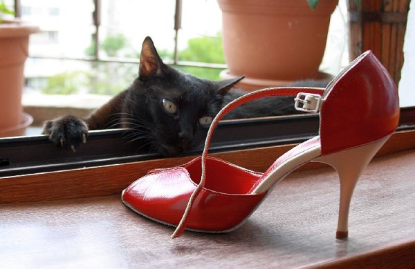 pantofi-tango