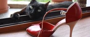 pantofi-tango5