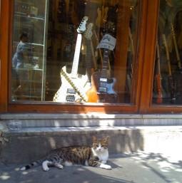 pisica-chitara