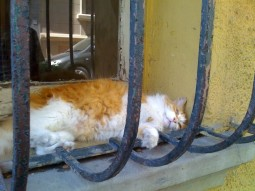 pisica-gratii