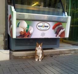 pisica-inghetata