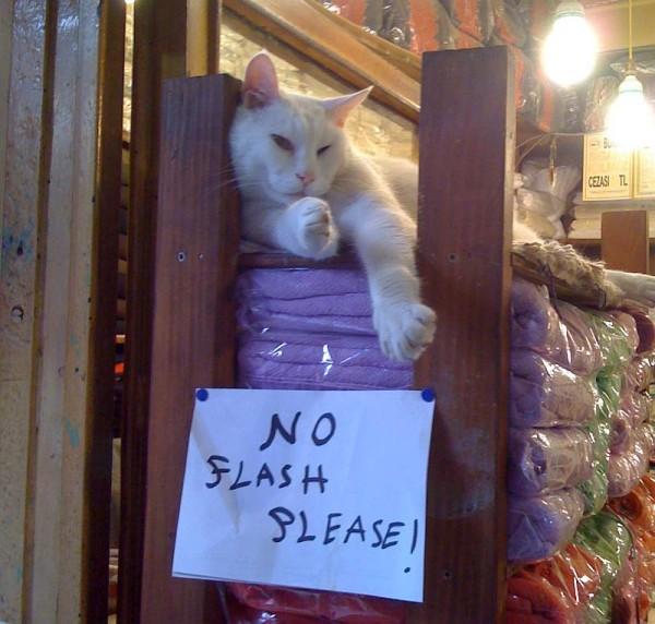pisica-no-flash