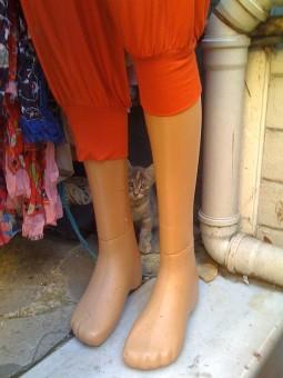 pisica-picioare