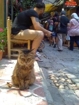 pisica-suparata