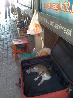pisica-valiza