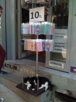 pisica3