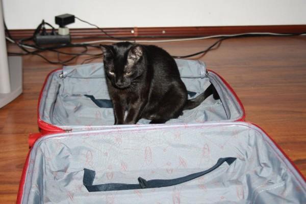 toshiba-valiza