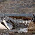 Leviathan, varianta necenzurată