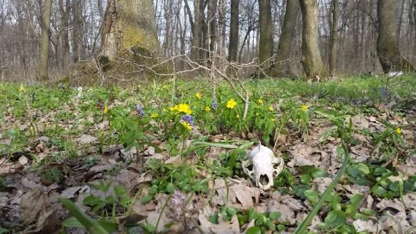 Primăvara în pădurea Călugăreni