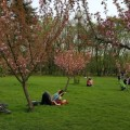 O după amiază în grădina japoneză