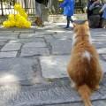 pisica-atena