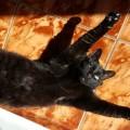 Ziua pisicii în vremea renovării